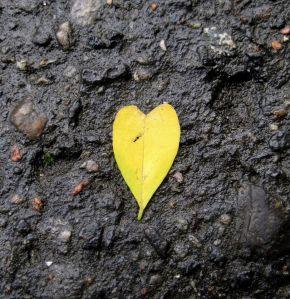 Polish heart leaf